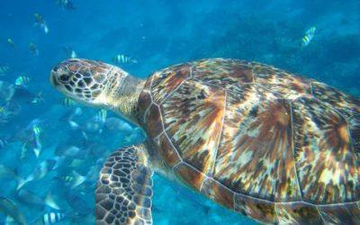 Unter Wasser auf unseren Reisen